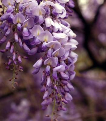 австралийски цветни есенции